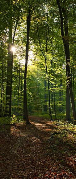 Il Plonner Dorf-Gasthof Wessling Umweltschutz